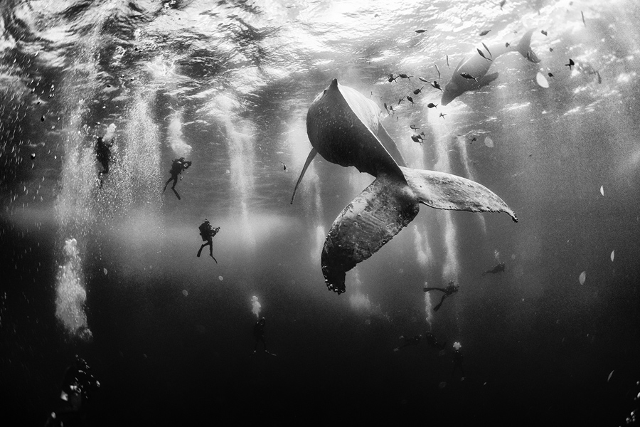 Grand prize winner from National Geographic.