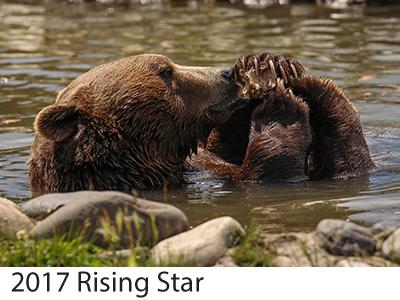 2017 Rising Star Winners